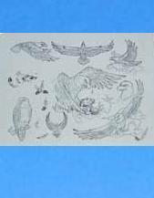 供应纹身练习皮专卖批发销售-北京轩龙纹身器材图片