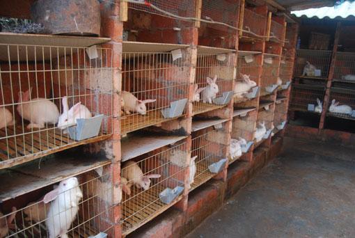 养殖兔笼设计图
