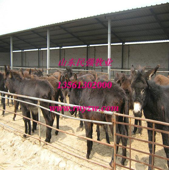 河北秦皇岛养羊场-秦皇岛波尔山羊养殖场图片