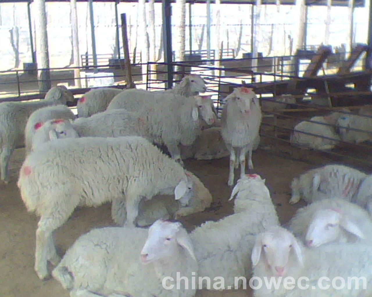 海南省陆生野生动物驯养