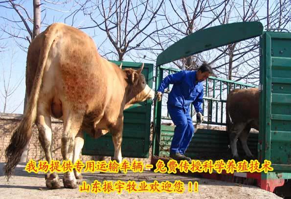 供应养牛场建设补贴 肉牛养殖场规划建设 山